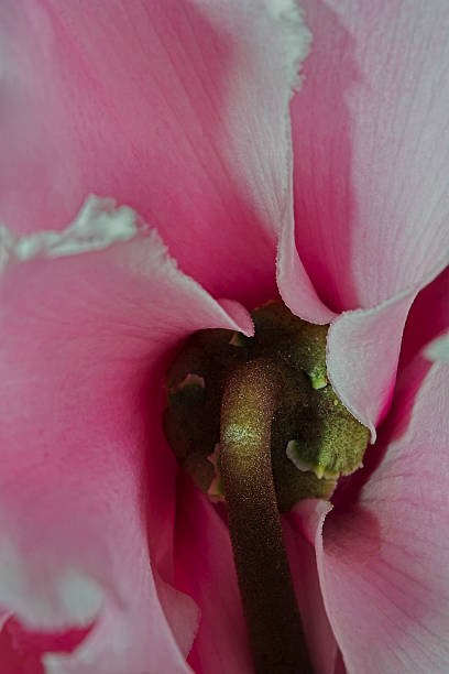 Rückwärts Blume – Foto