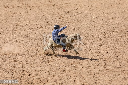 High quality stock photo of a young woman riding backwards on a mutton in between a rodeo contest in Utah.