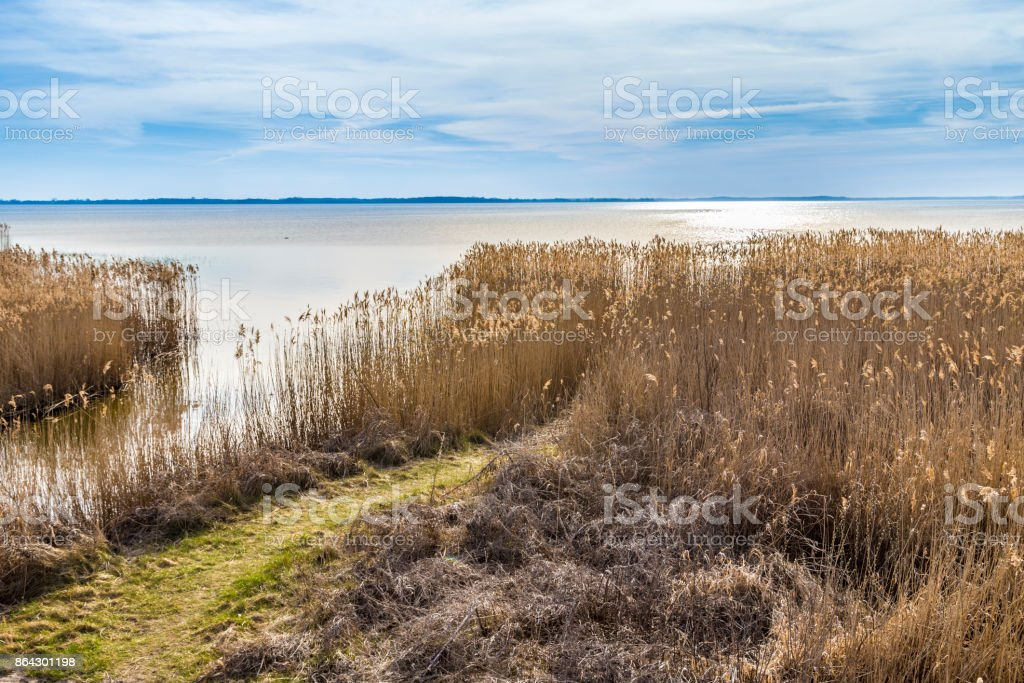 backwater at baltic sea with reed grass in Usedom royalty-free stock photo