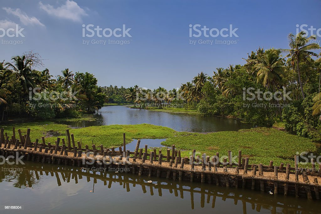 backwaters of cochin in kerala stock photo