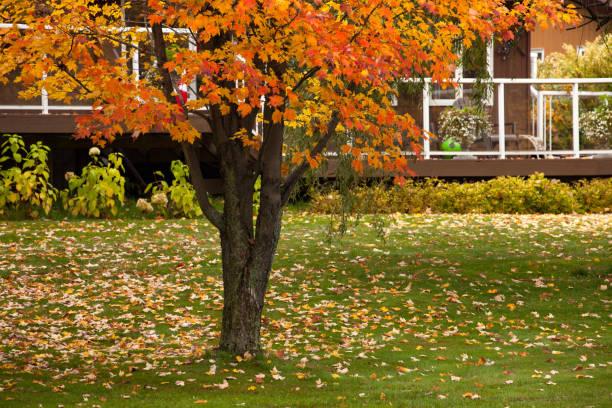 Backyard - Autumn in Canada. Beautiful autumn scene in Ontario Province. stock photo