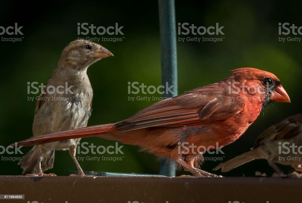 Backyard birds stock photo