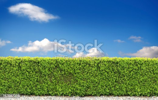 natural bush fence of backyard over clear sky.