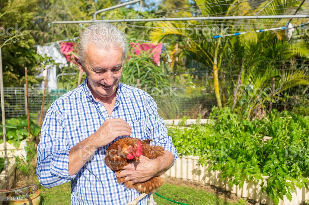 Backyard Chicken Man royalty-free stock photo