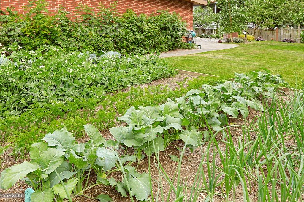Garten Gartenbett Mit Wachsende Grüne Zwiebeln Und Andere Kulturen