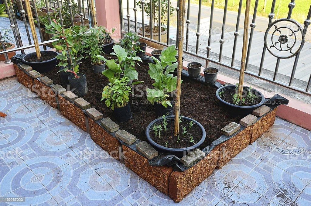 Backyard garden or HOME GROWN VEGETABLE stock photo