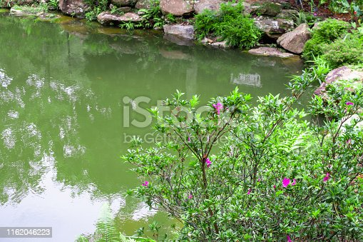 backyard garden pond with green plant