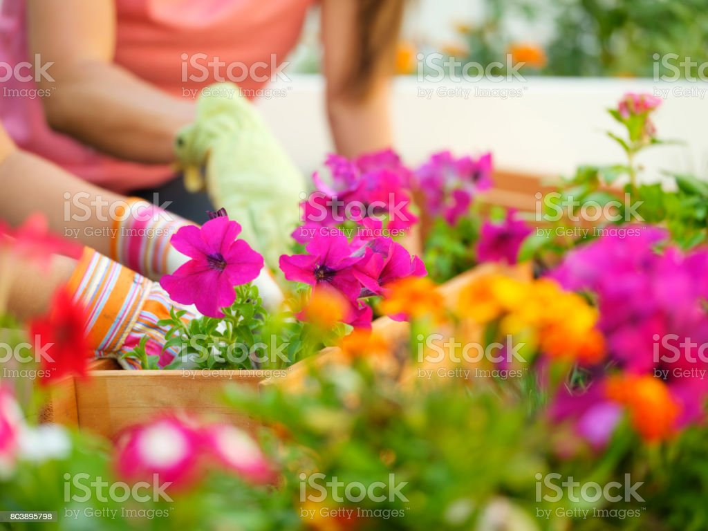Backyard Gardening stock photo