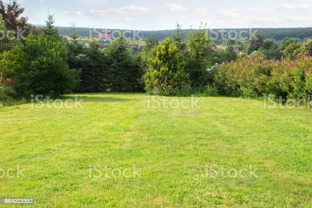 Photo of backyard landscape