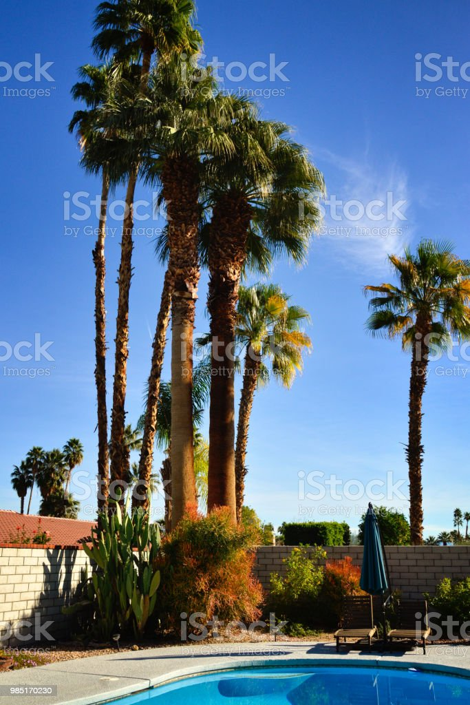 Backyard Palm Trees Pool And Desert Garden Plants At Palm Springs