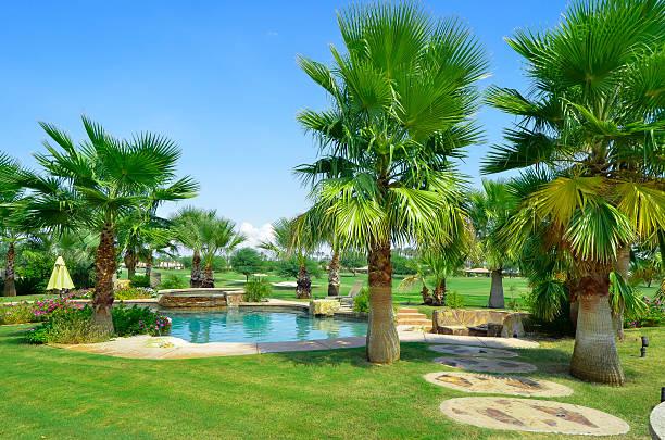 Backyard paradise stock photo