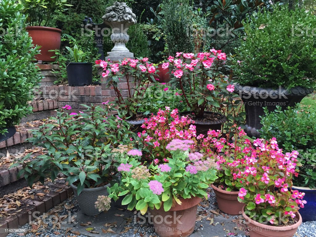A backyard patio container garden filled with flowers and evergreens....