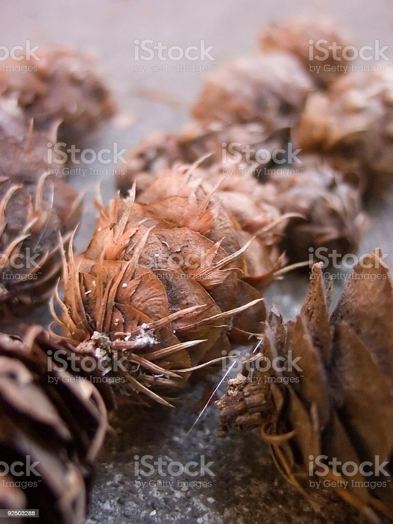 Backyard pinecones royalty-free stock photo