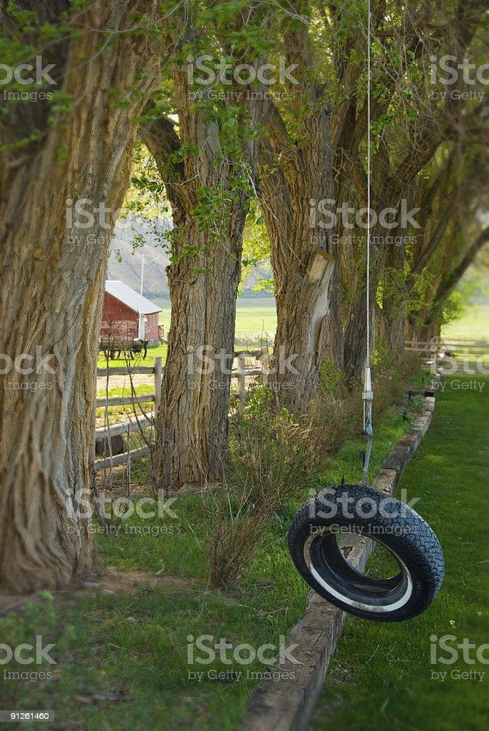 Beau Backyard Tire Swing Royalty Free Stock Photo