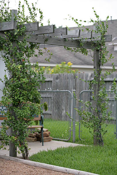 Backyard trellis and chain link fence You know, there's a creative title for this image out there somewhere but I just don't have the mojo going tonight. So I went with the obvious, boring, descriptive title. bunnylady stock pictures, royalty-free photos & images