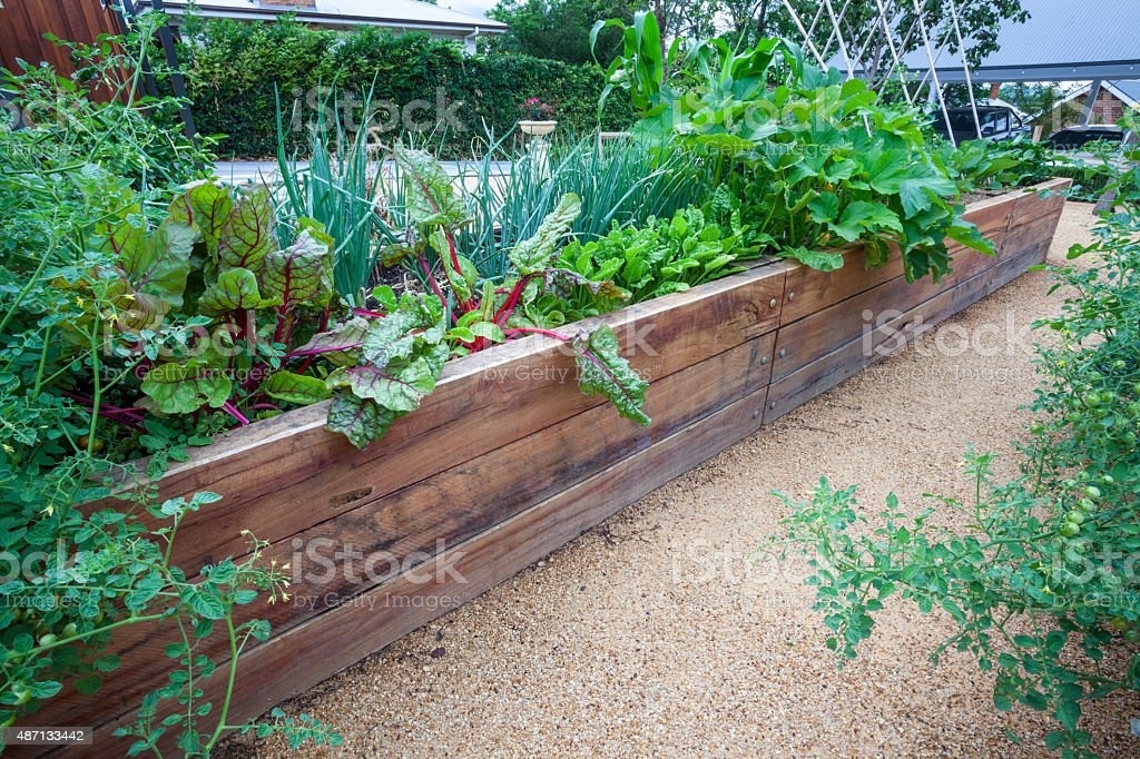 Backyard vegeatble garden beds. stock photo