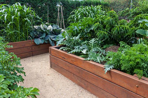 Backyard vegetable garden stock photo