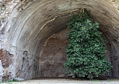 istock Bacoli, Naples. 20 August 2019. A tree grown upside down. The tree has roots in the upper part of a cave. 1182270869