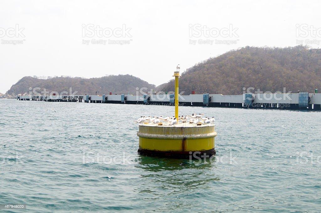 Bacon buoy with seagulls perching at Santa Cruz Huatulco Port. stock photo