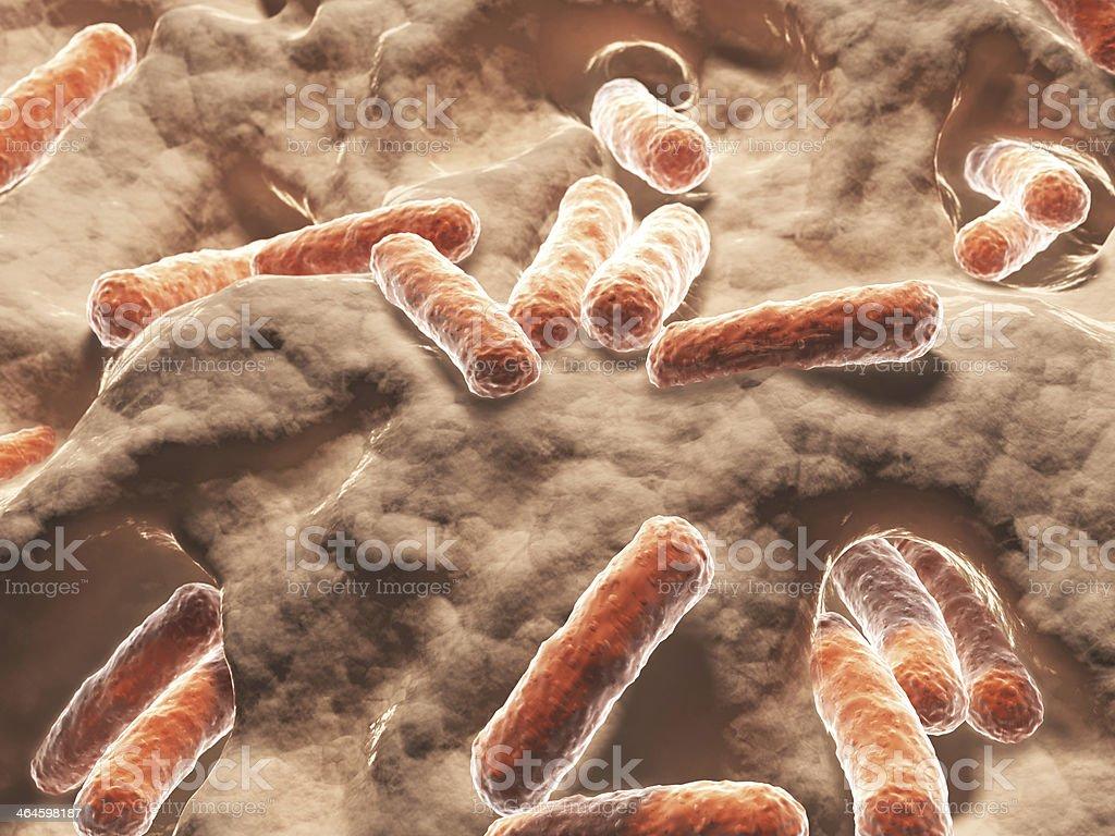 Bacteria, bacilli royalty-free stock photo