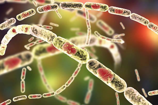 bacteria bacillus anthracis - antrace foto e immagini stock