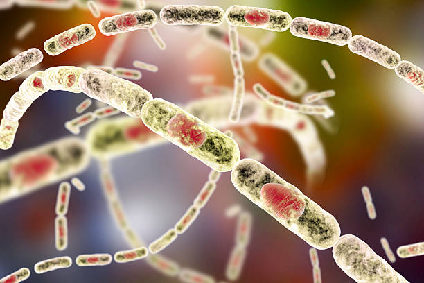 Bacteria Bacillus anthracis stock photo