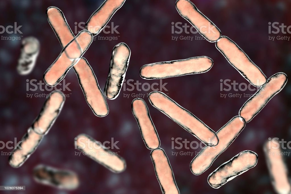 Bacteria Bifidobacterium, gram-positive anaerobic rod-shaped bacteria which are part of normal flora of human intestine stock photo