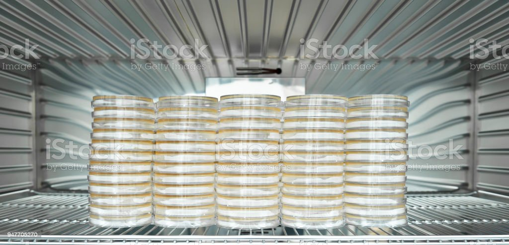 Bacteria cell colonies were incubated on the petri dishes and tubes in the CO2 incubator stock photo
