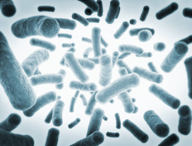 bacteria cells - micro organism stock photos and pictures