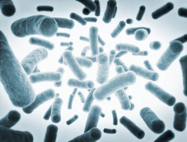 Bacteria cells stock photo