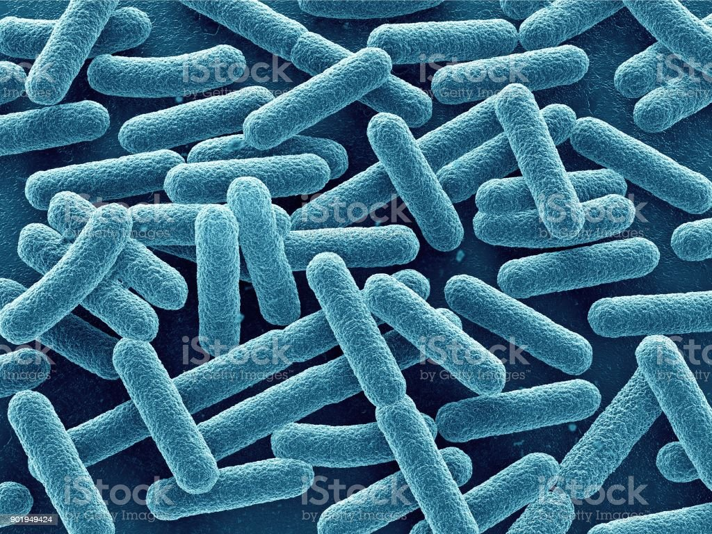 Bacteria close up stock photo