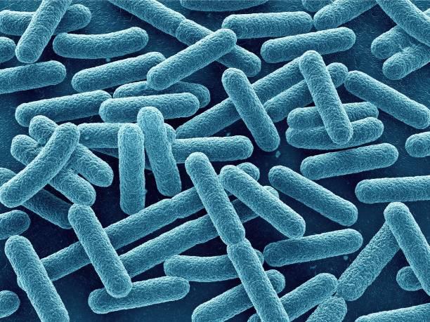 Bacteria close up stock photo
