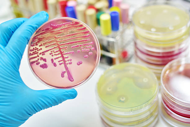 bacteria culture - microbiology stock pictures, royalty-free photos & images
