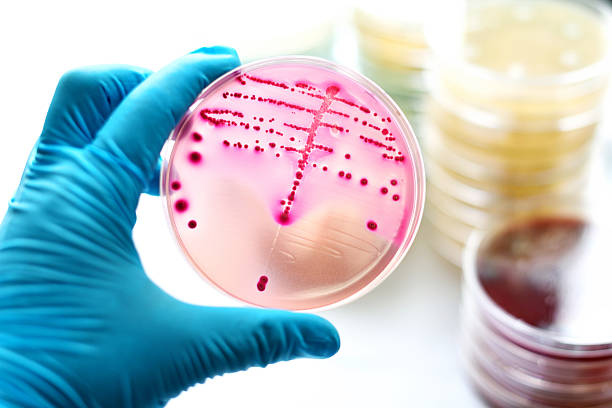Bacteria culture stock photo