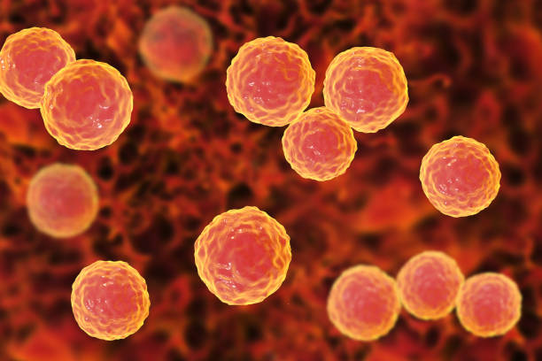 Royalty Free Enterococcus Faecium Pictures, Images and ...