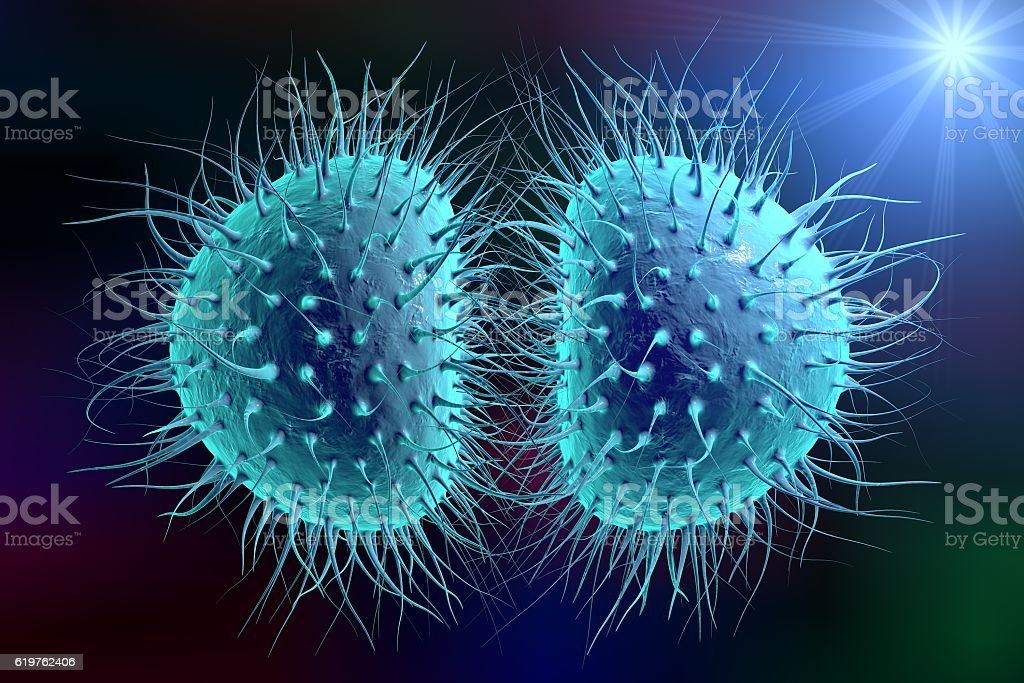 Bacteria gonococcus or meningococcus stock photo