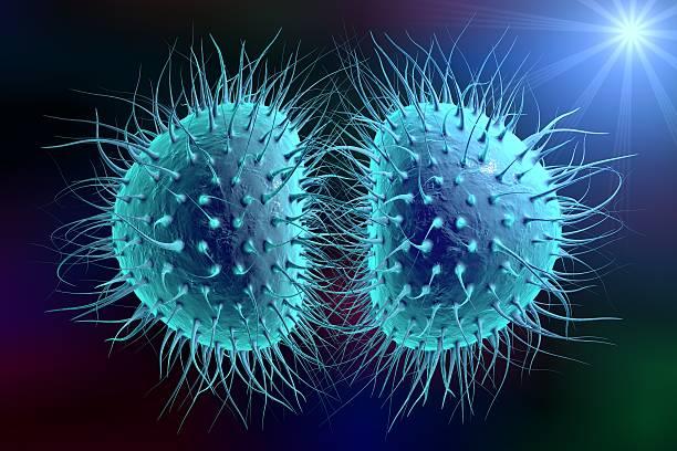 Bacteria gonococcus or meningococcus Bacteria Neisseria gonorrhoeae or Neisseria meningitidis, gonococcus and meningococcus, 3D illustration. Bacteria which cause gonorrhoeae. Bacteria which cause meningitis gram stain stock pictures, royalty-free photos & images