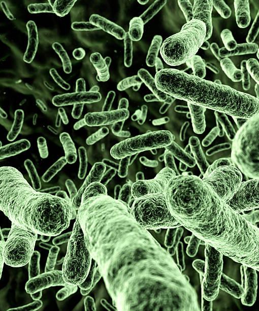 Bacteria [green] stock photo