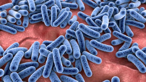 Bacteria, human microbiome stock photo