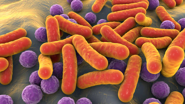 Bacteria, human microbiome stock photo