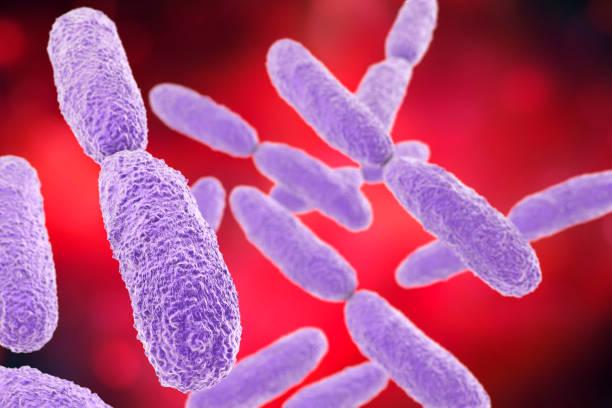 Bacteria Klebsiella, illustration stock photo