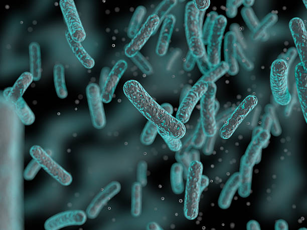 bacteria, microbes - microbiology stock photos and pictures
