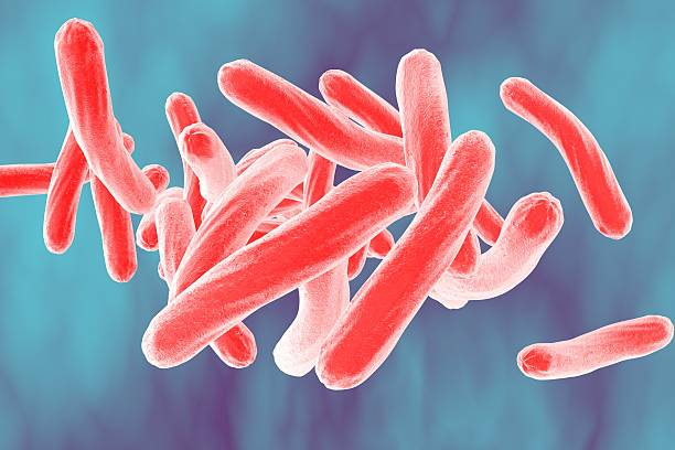 Royalty Free Tuberculosis Bacterium Pictures Images And Stock