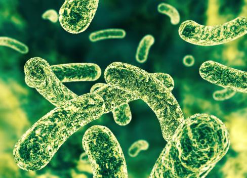 Bakterien Stockfoto und mehr Bilder von Bakterie