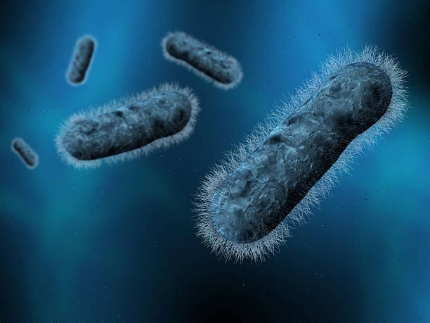 Bakterien. – Foto
