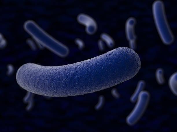 batteri  - antrace foto e immagini stock