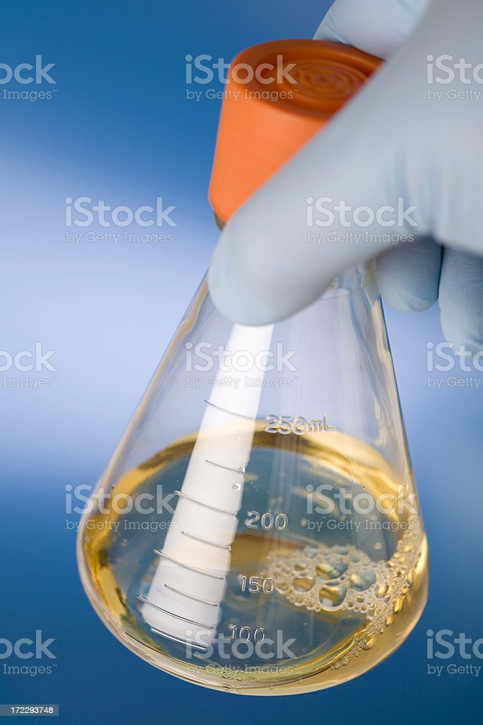 Bacterial culture royalty-free stock photo