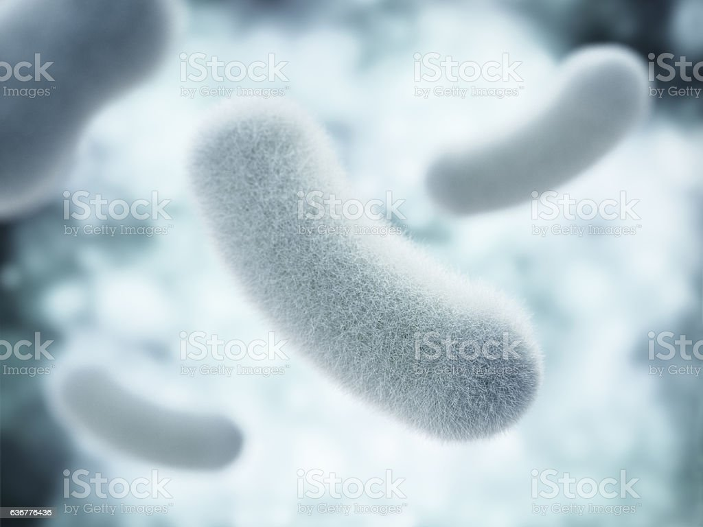 Bacterial infection. Rod-shaped bacteria. stock photo