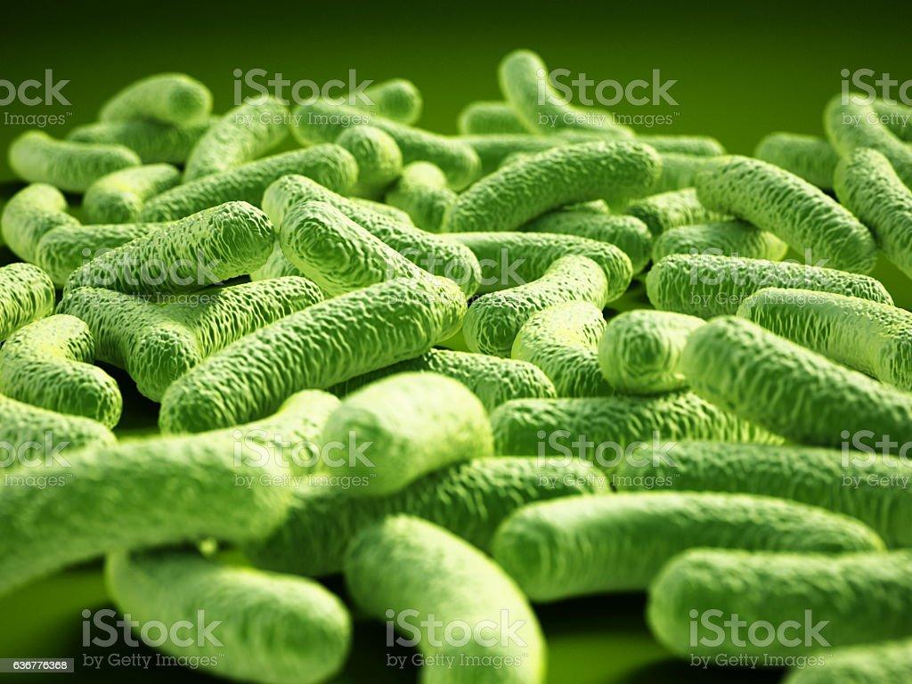 Bacterial infection. Rod-shaped Lactobacillus bacteria. - foto de stock