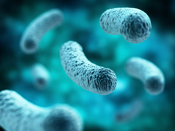 Bacterial infection. Rod-shaped Lactobacillus bacteria. Bacterial infection. Green Rod-shaped Lactobacillus bacteria. lactobacillus stock pictures, royalty-free photos & images